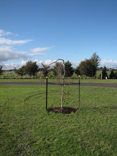 Cemetery Trees (2)