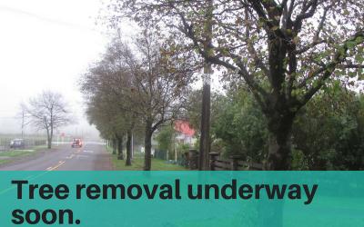 Tree removal underway soon – Brooklyn Road
