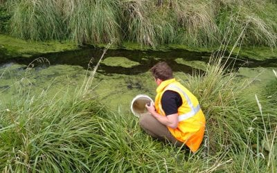 Media Statement – Wellbeing surveys on rehomed mudfish population underway
